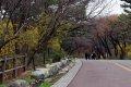 남산공원, 북측순환로의 봄(서향) 01