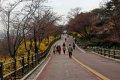 남산공원, 북측순환로의 봄(서향) 03
