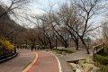 남산공원, 북측순환로의 봄(서향) 05