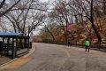 남산공원, 북측순환로의 봄(서향) 06
