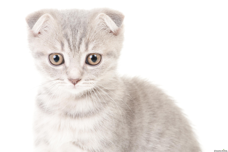 M Cat Names Doopedia Photo Communi...