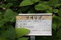 서울대학교 약초원의 식물들 - 벌깨덩굴, 수선화, 가새쑥부쟁이