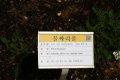서울대학교 약초원의 식물들 - 물싸리풀, 골담초, 디기탈리스