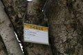 서울대학교 약초원의 식물들 - 수사해당화, 생강나무, 톱풀