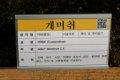 서울대학교 약초원의 식물들 - 개미취, 기름나물, 시호, 일당귀