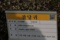 서울대학교 약초원의 식물들 - 참당귀, 당근, 일천궁, 전호, 각시원추리