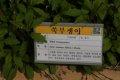 서울대학교 약초원의 식물들 - 쑥부쟁이, 풀솜대, 솜양지꽃,