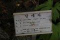 서울대학교 약초원의 식물들 - 당매자, 큰천남성