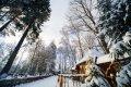 브레스트 겨울 숲