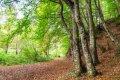 스트란드자 숲속 산책로