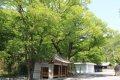 흥암마을 느티나무