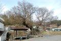 용암리 느티나무 보호수