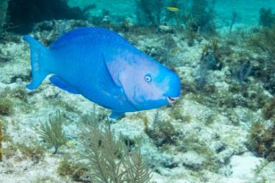 john pennekamp coral reef schnorcheln