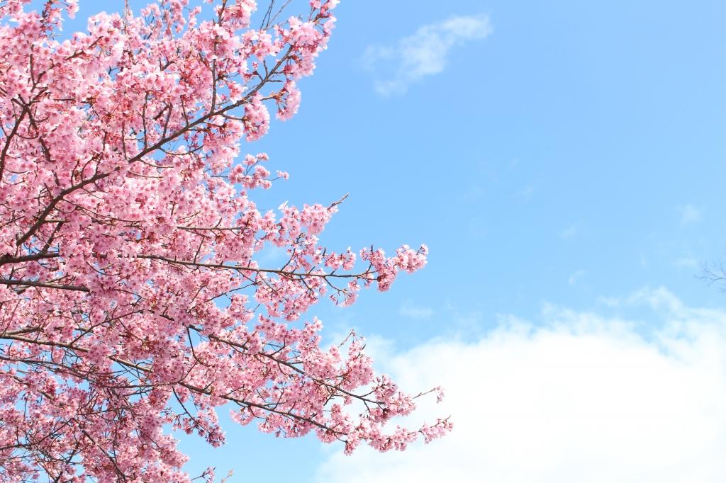 베프엄마랑 떠난 벚꽃 교토!