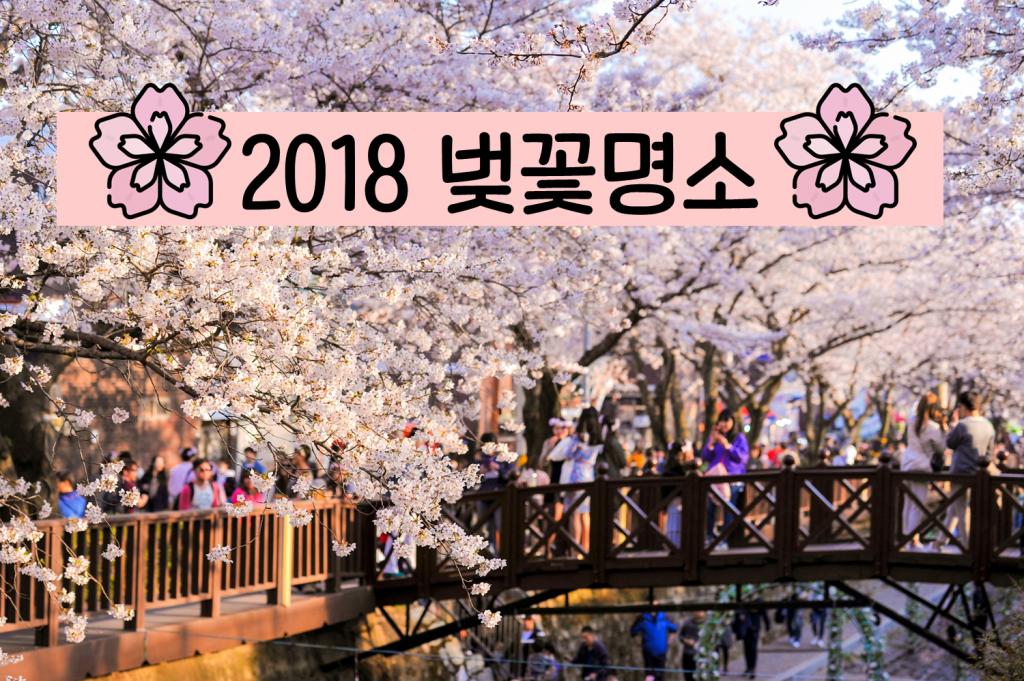 이번 주말, 벚꽃 보러 가자!