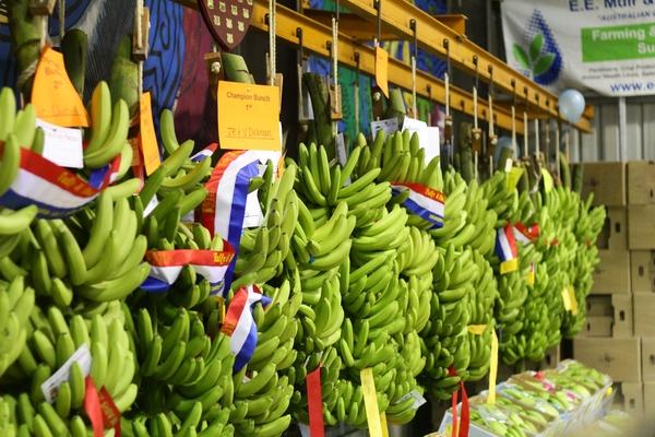 캠핑장 로빈손크루소 생활기, 바나나농장의 신이 되다. 아이러니 행복.(호주 바나나농장)