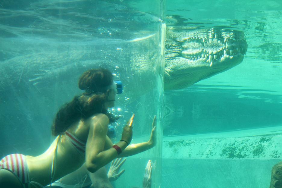거대 악어와 함께 수영을? 무지막지한 턱힘을 가진 괴물.(호주 다윈)