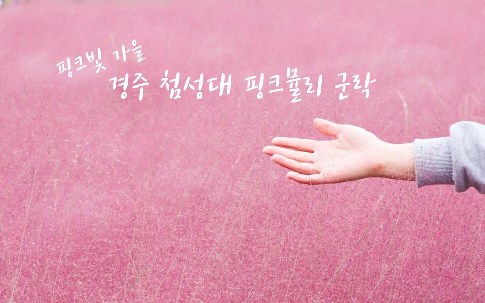 핑크뮬리.png