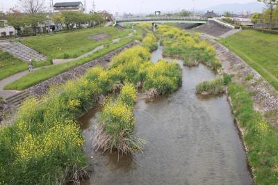 우쓰쓰강, 봄 풍경