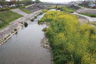 우쓰쓰강, 봄 풍경 07