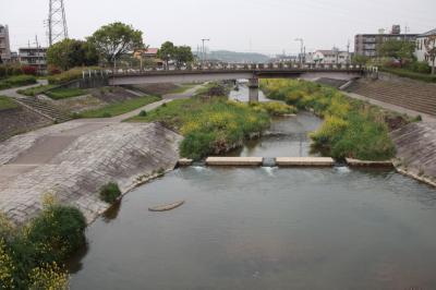 우쓰쓰강, 봄 풍경 08