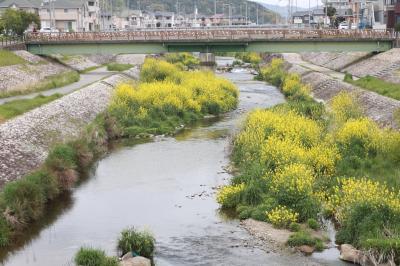 우쓰쓰강, 봄 풍경 11