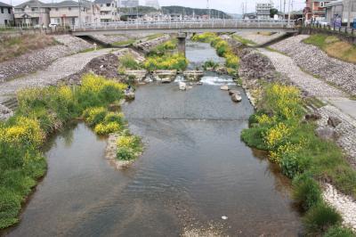 우쓰쓰강, 봄 풍경 13