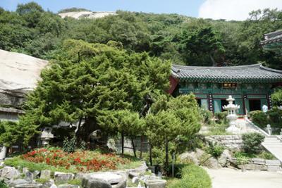 보문사 향나무