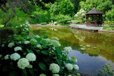 오다이공원, 가시연 연못 02