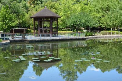 오다이공원, 가시연 연못