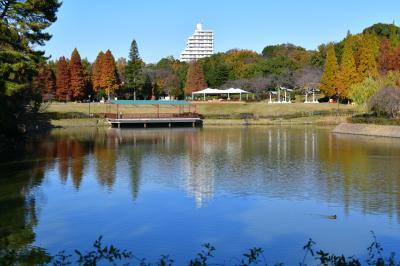 오다이공원, 가을 풍경 02