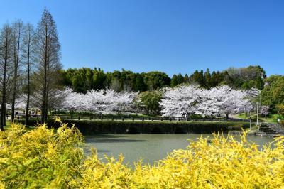 오다이공원, 봄 풍경 03