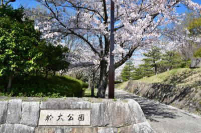 오다이공원, 봄 풍경