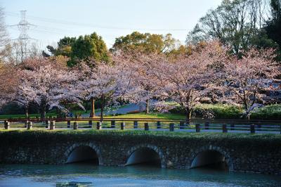 오다이공원, 봄 풍경 02