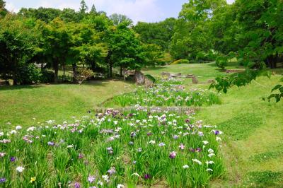 오다이공원, 꽃창포 02