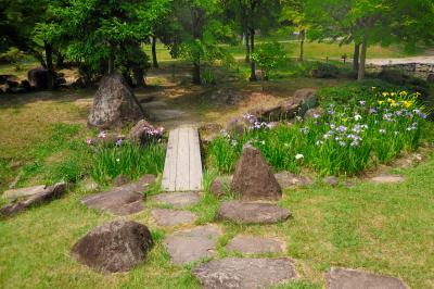 오다이공원, 꽃창포 03