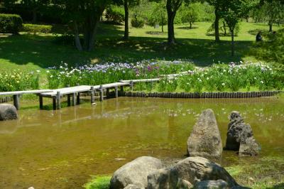 오다이공원, 꽃창포