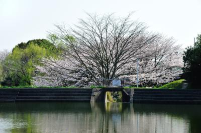 사루가 연못 02