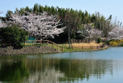 사루가 연못 03