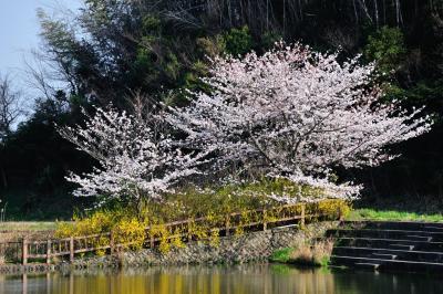 사루가 연못
