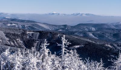 리사 고레 숲 겨울풍경
