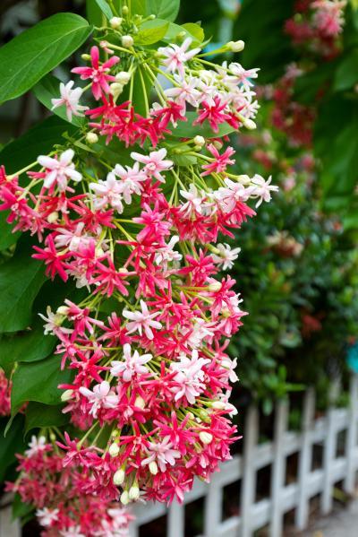 사군자 꽃 09
