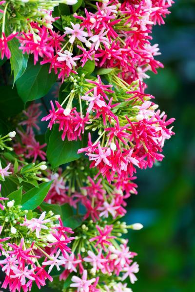 사군자 꽃 10