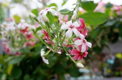 사군자 꽃 02
