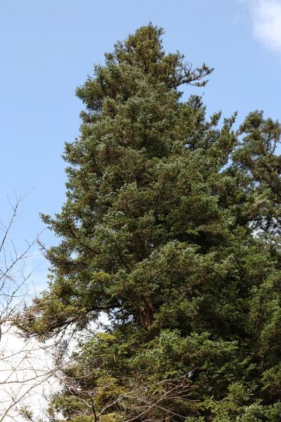 주자이거우 풍경명승구, 르저거우 원시삼림 10