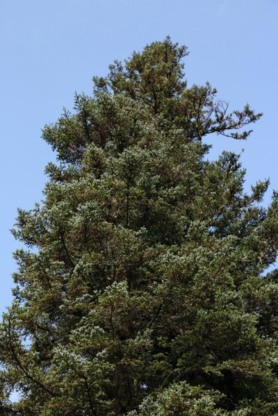 주자이거우 풍경명승구, 르저거우 원시삼림 11
