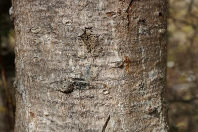 주자이거우 풍경명승구, 르저거우 원시삼림 05