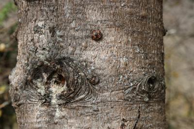주자이거우 풍경명승구, 르저거우 원시삼림 06