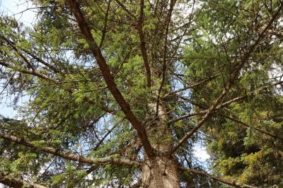 주자이거우 풍경명승구, 르저거우 원시삼림 07