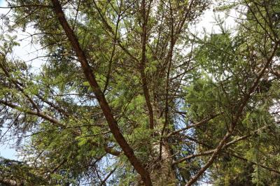 주자이거우 풍경명승구, 르저거우 원시삼림 08